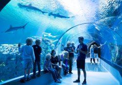 Fascinerende oplevelse med fisk og havdyr på Den Blå Planet